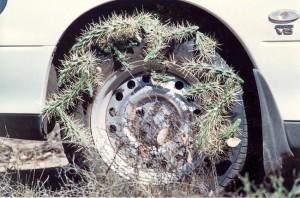 Hudson-pear-on-car-wheel